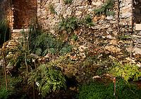 Plant History Glasshouse (formerly Australian Glasshouse), 1830s, Rohault de Fleury, Jardin des Plantes, Museum National d'Histoire Naturelle, Paris, France. General view of Selaginella plant in the glasshouse lit by the midday sun.