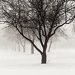 #blackandwhite #monochrome #wisconsin #midwestmemoir #photograph #tree #fog #snow #winter #landscape