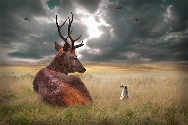 Stag lying down on wide plains with stormy skies