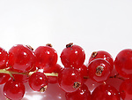 Fresh redcurrant berries on a bright background close-up