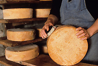 Europe/France/Midi-Pyr&eacute;n&eacute;es/09/Ari&egrave;ge/Env. de Castillon-en-Couserans/Ayet&nbsp;: Salage du fromage de Bethmale en cave &agrave; la fabrique de fromage de Bethmale<br /> PHOTO D'ARCHIVES // ARCHIVAL IMAGES<br /> FRANCE 1980