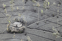 Agricultural fields and building coated in volcanic ash from the eruption of Bromo Volcano, Tengger Caldera, Java, Indonesia.