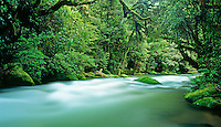 Whirinaki River flowing through pristene rainforest in Whirinaki Forest Park in the Central North Island of New Zealand