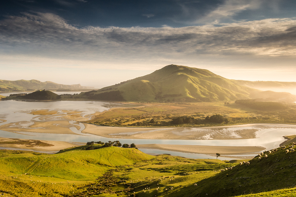 Early morning on Otago Peninsula looking across to Hoopers Inlet and Otago Harbour. Sheep grazing in the foreground, Otago, South Island, New Zealand