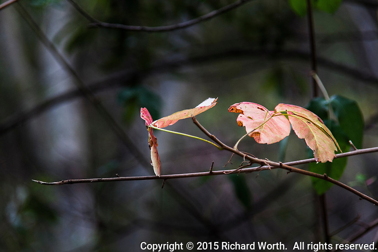 Leaves with a touch of autumn against a soft background along a regional park hiking trail.