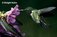 Hummingbirds - Life Cycle