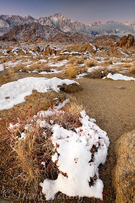 711700282 winter sunrise with snow covered granite boulders in the bureau of land management protected land the alabama hills in the southern section of the eastern sierras with lone pine peak mount whitney and mount russell in the background in kern county california