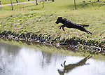 Toddington Manor / Herne Manor Farm Charity Working Test 1st April 2012