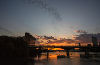 The Congress Avenue Bridge spans Lady Bird Lake in downtown Austin and is home to the largest urban bat colony in North America. The colony is estimated at 1.5 million Mexican free-tail bats. This event has become the most spectacular and unusual tourist attractions in Texas.