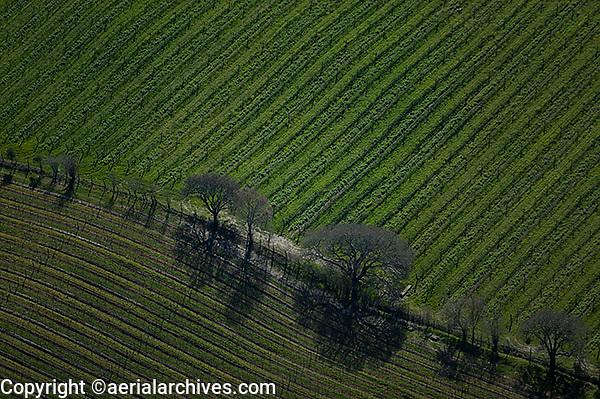aerial photograph vineyard Napa Valley, California