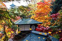 Sankeien Park autumn colours