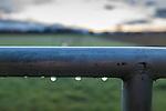 Morning dew at dawn, Freedom Farms in Agnew WA