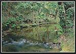 FB 290, 5x7 postcard, The Gazos Creek Forest