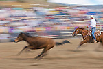 A running horse during the BIg Loop Roping,  Jordan Valley Big Loop Rodeo, Ore.
