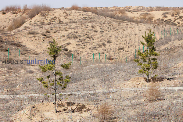 Northern China is experiencing lengthy drought and desertification. The Chinese are trying to combat this by planting millions of trees to reduce erosion and the spreading sand dunes.