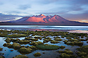 Bolivia, Altiplano, Laguna Canapa at sunset