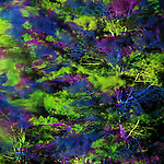 Abstract colorful light projection on green tree branches, artistic abstract nature scenery