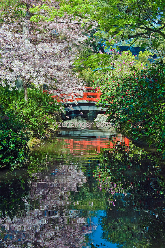Descanso Gardens, La Canada, CA, Japanese Tea House, Bridge, mixed, flora, botanic, colorful, blooming, spring