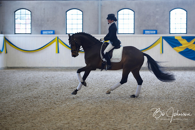 Minna Telde is riding Flash Dancer IM 1175 (born 2005, 161 cm, exterior 40 points, AB-awarded in 2009).<br /> Flash Dancer is a noble stallion who's extraordinary gates are characterised by lightness and greatness. This impression is enhanced by his great will to work and ambitiousness.<br /> At the traditional stallion show at Jan Brink's Tullstorp Dressage Stable near Hassleholm, Sweden.<br /> March 2010.<br /> Only for editorial use.