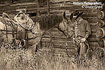 A sepia toned photograph of a cowboy leaning up against an old barn holding his horse. Cowboy Photos, riding,roping,horseback