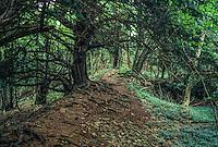 England, Offa's Dyke Footpath, Highbury Forest.