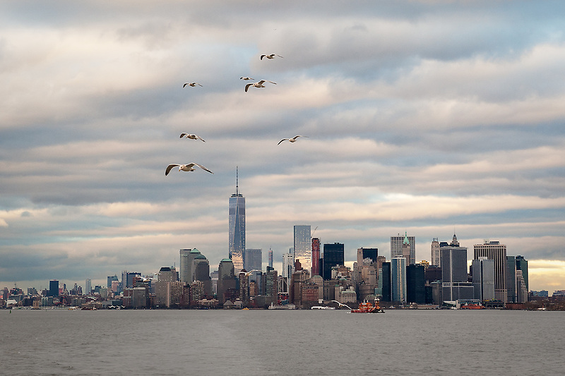 &quot;Seagull Skyline&quot;<br />