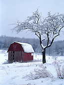 Snow covered barn next to apple tree.
