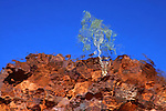 This a photograph of the reflection of a small Ghost Gum on the cliff above John Hayes Rock-hole in the East MacDonnell Ranges.<br /> It typifies there ever presence and contrasting white trunks on classic Central Australian Red Rock and Blue sky