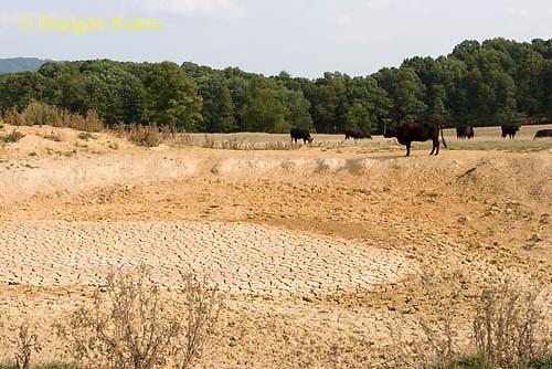 WG08-506z  Dried up Pond, Virginia