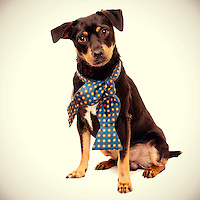 Great dog portraits help shelter dogs find homes.
