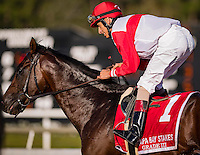 OLDSMAR, FLORIDA - FEBRUARY 11: Inspector Lynley #1, ridden by John R. Velazquez (red hat), after winning the Tampa Bay Stakes at Tampa Bay Downs on February 11, 2017 in Oldsmar, Florida (photo by Douglas DeFelice/Eclipse Sportswire/Getty Images)