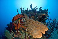 Underwater scenics atCane Bay wall, St. Croix, US Virgin Islands