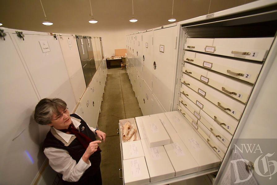Northwest Arkansas Democrat Gazette/SPENCER TIREY Nancy McCartney curator of zoologya at the Univserity of Arkansas shows shows the vast library of animal skulls the Univserity of Arkansas archeology departments has in its Fayetteville Friday February 26, 2016.