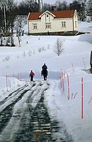 Europe/Norvège/Iles Lofoten/env de Valberg: cheval sur un chemin