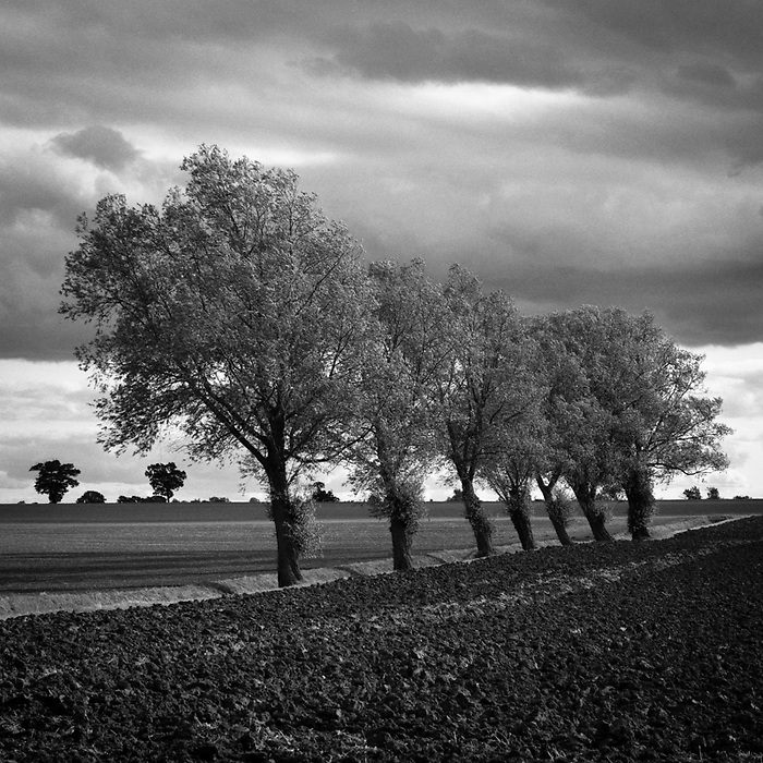 Walsham Le Willows, Suffolk, 2009