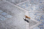 Cat walks in the medina of Chefchaouen, Morocco.
