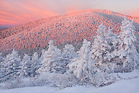 """ROAN MOUNTAIN MAGIC"" -- Sunrise light illuminates Roan High Peak on a frigid winter morning in the Roan Highlands area of western North Carolina and Eastern Tennessee."