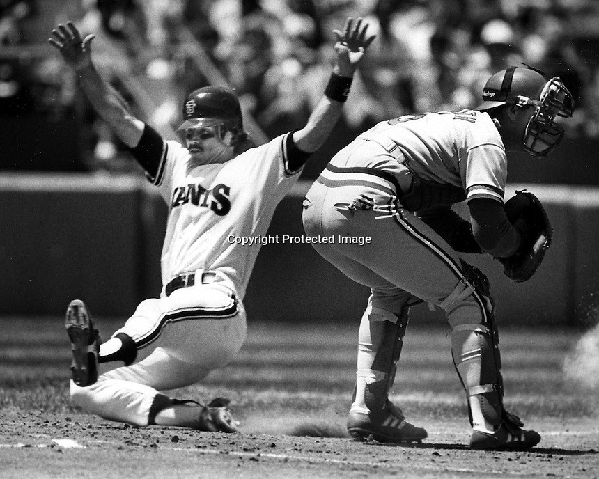 Giants Randy Kutcher,(looks like Dan Gladden) slides home safe Cards catcher Mike Heath waits for late throw. (1986 photo by Ron Riesterer)
