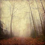 Forest shrouded in fog with solitary person walking into the fog<br />
