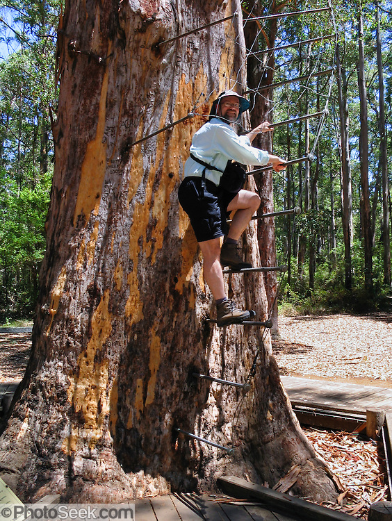 Manjimup Australia  city photo : ... Tree fire lookout Karri, Manjimup, Western Australia. | PhotoSeek.com