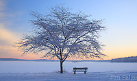 Winter in the Park - Lake Massabesic