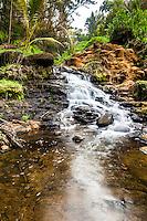 A jungle waterfall on the tropical island Kauai  in Hawaii