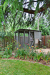 Urban backyard chicken coop with chickens