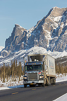 Truck drives the James Dalton Highway by mount Sukakpak in Alaska's Arctic.