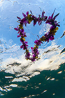 An underwater view of a heart-shaped purple and yellow flower lei floating on the water's surface, O'ahu.