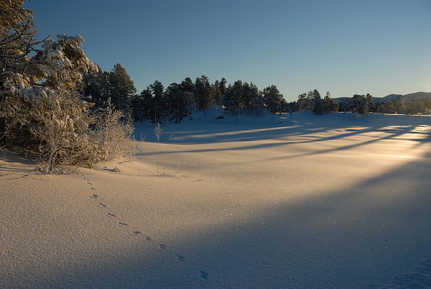 Tracks in snow,Norway Landscape, landskap,