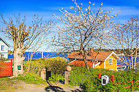 Hus på Dalarö med blommande äppelträd vid Jungfrufjärden. / Houses on Dalaro with blooming apple trees at Jungfrufjärden.
