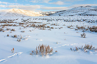 Lamar Valley during winter