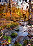 A stream flows over rocks and through a wood ablaze with autumn colors, backlit by the setting sun at Abingdon Vineyard and Winery, near Abingdon Virginia.  (HDR image)
