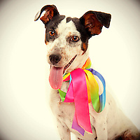 Adorable terrier at Front Street animal shelter in Sacramento, CA finds a home.